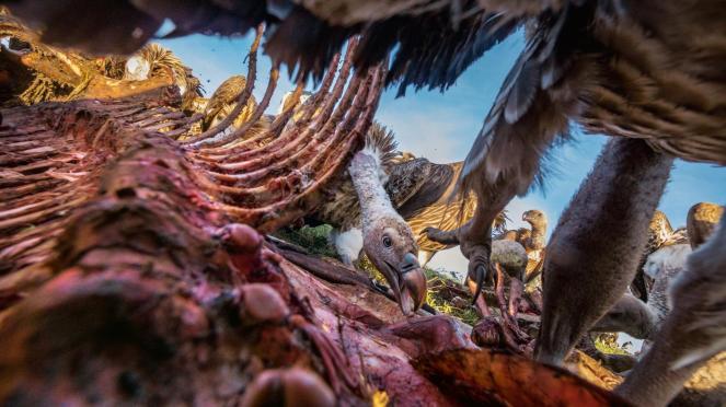 carcass-vulture-adapt-1900-1