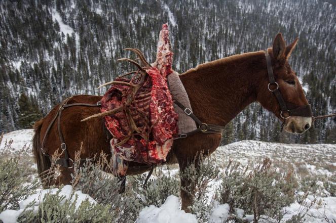 elk-mule-adapt-1190-1