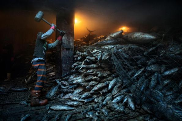 overfishing-south-china-sea-adapt-1900-1