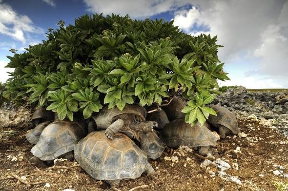 tortoises-adapt-590-1